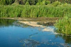 Środowiskowa katastrofa na rzece Mszalna śmierć ryba fotografia royalty free
