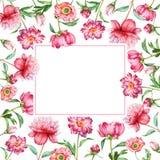 Świąteczna rama z czerwonymi kwiatami Fotografia Stock
