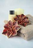 świąteczny pampering zdrój Fotografia Stock