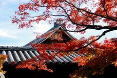 Świątynia dach z Japońskim klonowym drzewem w pierwszoplanowej jesieni Fotografia Royalty Free