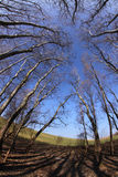 Świątynia drzewa Obraz Stock