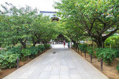 Świątynia Kamakura Zdjęcie Royalty Free