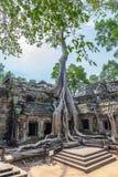 Świątynia Ta Prohm w Kambodża Obraz Stock