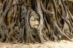 Świątynia w Ayutthaya z głową Buddha chujący w obraz stock