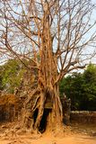 Świątynny wejście Fotografia Stock
