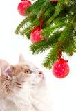 Święta kocich futerka drzewo Zdjęcie Stock