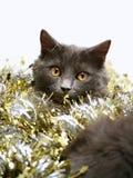 Święta kotów Zdjęcie Stock