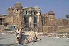 święta krowa hindusów Obraz Royalty Free
