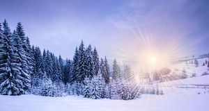Święta kształtują obszar noel drzew zimę fotografia stock