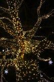 Święta moje portfolio drzewna wersja nosicieli Fotografia Royalty Free