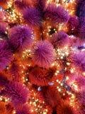 Święta moje portfolio drzewna wersja nosicieli Zakończenie choinka Girlandy na drzewa zakończeniu Czerwone i purpurowe choinek ig Zdjęcia Stock