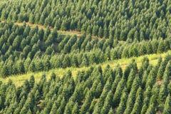 Święta uprawiają drzewa obrazy royalty free