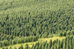 Święta uprawiają drzewa zdjęcie stock