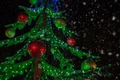 Święta zielone drzewa Zdjęcia Royalty Free