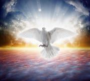 Świętego ducha ptak lata w niebach, jaskrawi światło połysk od nieba obraz stock