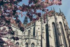 Świętego Elizabeth katedra w Kosice, Sistani Obraz Royalty Free