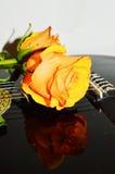 Świętować miłości, zakończenie fotografia royalty free