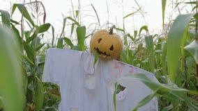 Świętowanie Halloween Strach na wróble z Jack lampionem zamiast kierowniczej pozyci w polu kukurudza zbiory