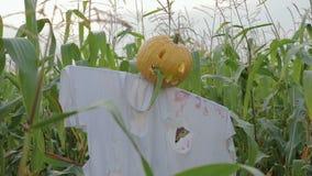 Świętowanie Halloween Strach na wróble z Jack lampionem zamiast kierowniczej pozyci w polu kukurudza zbiory wideo