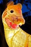 świętuje chińskiego nowego tygrysa rok Zdjęcie Royalty Free