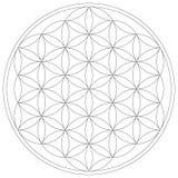 Święty geometria kwiat życie wektoru ilustracja ilustracji