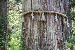Święty Japoński drzewo na górze Haguro obraz stock