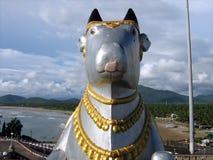 święty krowa plażowy idol Zdjęcia Royalty Free