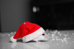 Święty Mikołaj mysz Zdjęcia Stock