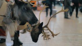 Święty Mikołaj z reniferem przy lotniskiem zbiory wideo