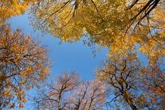 Święty Petersburg, Rosja - drzewa w Peter i Paul fortecy, Październik, Złota jesień zdjęcia stock