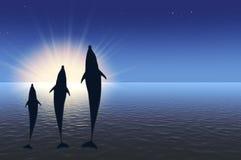 światła delfinów wysoki skokowy trzy słońca pod wodą Fotografia Stock