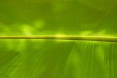 Światła i cienia liścia Zielony Bananowy tło Zdjęcie Stock