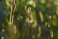 Światła i cienie na śródpolnej trawie Obraz Stock