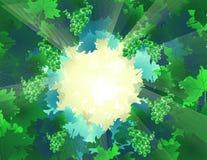 światła leśnych ilustracja wektor