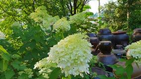 Światła rampy kwiat obraz stock