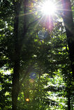 Światła słonecznego łamanie przez drzew Obraz Royalty Free