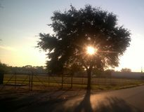 Światła słonecznego drzewo fotografia stock