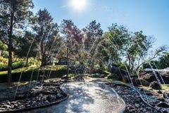 Światła słonecznego i wody krople Fotografia Stock