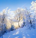 Światła słonecznego jaśnienie przez drzew Obrazy Royalty Free