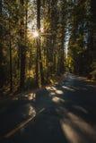 Światła słonecznego jaśnienie Przez lasów Zbliża Szczęśliwą wyspy pętli drogę, Yosemite park narodowy, Kalifornia fotografia stock