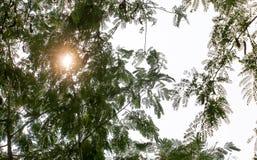 Światła słonecznego tło 243 Obraz Royalty Free