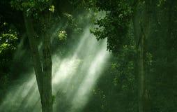światła się lać lasu fotografia stock