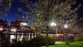 Światła w drzewach Zdjęcie Stock