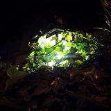 światło Zdjęcia Stock