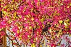 Światło dzienne widok jaskrawa purpurowa wiosna kwitnie z zielonymi liśćmi Obraz Stock