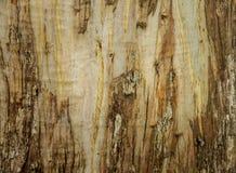 Światło i ciemny naturalny drewniany gładki tło Zdjęcie Stock