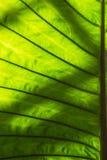 Światło i cienia Zielony liść dla tła Zdjęcia Stock