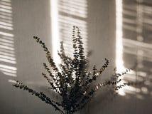 Światło i cienie Zdjęcia Stock