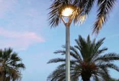 Światło i palmy obrazy stock