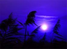 światło księżyca Zdjęcie Stock